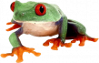 frog_9.png